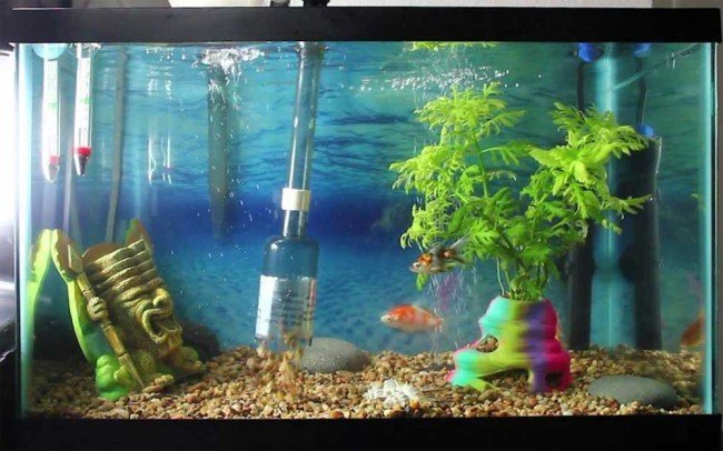 Cleaning archives myaquarium for How often should you clean a fish tank