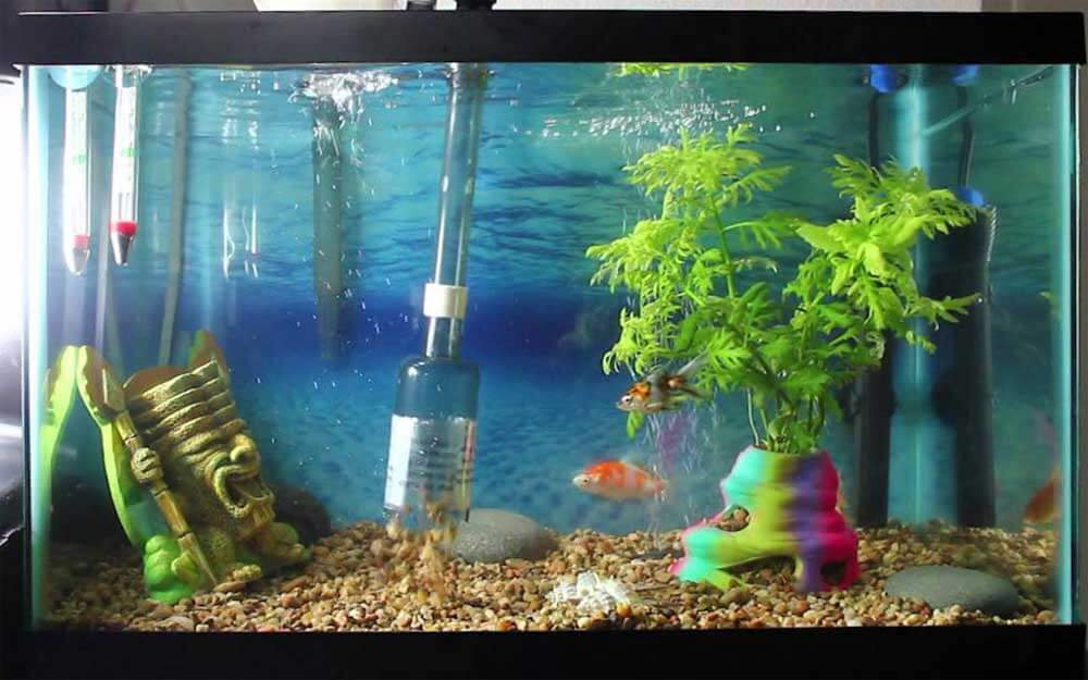 Cleaning and maintaining a large aquarium essential for Clean fish tank