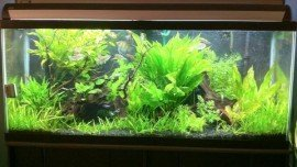 Plant based 75 Gallon fresh water based fish tank