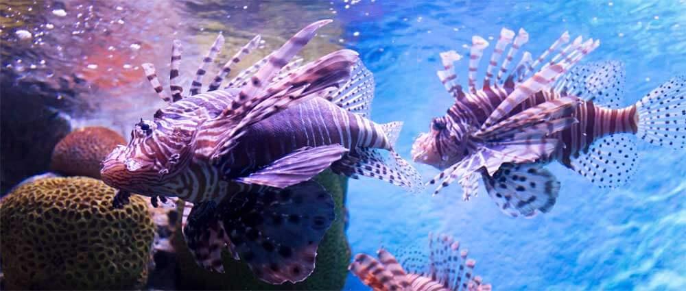 Saltwater vs freshwater 75 gallon fish tanks myaquarium for Saltwater fish aquarium