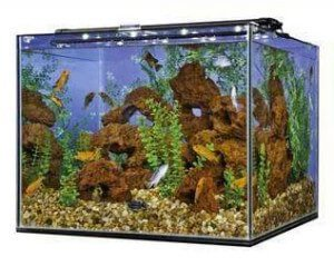 Perfecto 93 Gallon Rimless Aquarium