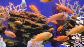 Fresjwater Large Aquarium