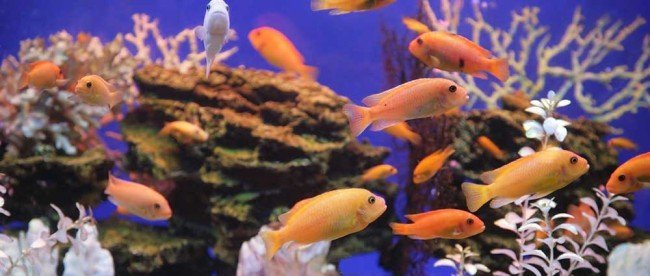 55 gallon fish tanks archives myaquarium for How often should you clean a fish tank