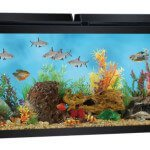12 top 55 gallon aquariums kits and fish tanks shortlisted for 55 gallon fish tank starter kit