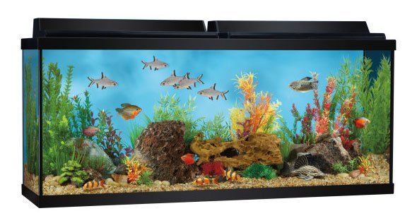 top fin 55 gallon aquarium starter kit review spec