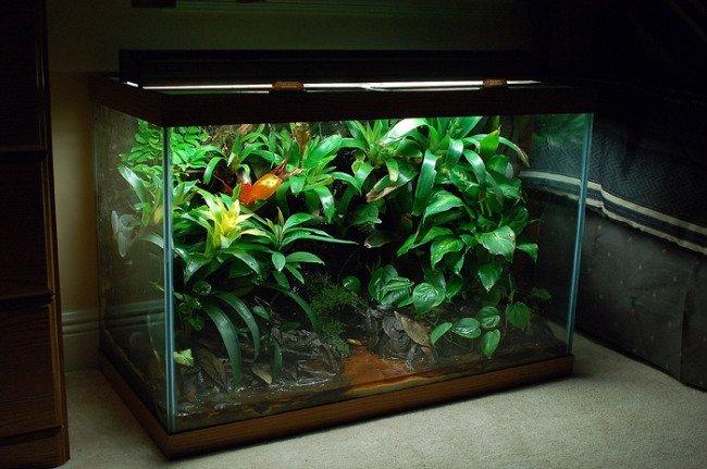 Reptile Aquariums & Vivariums: What Do You Need? | MyAquarium 10 Gallon Paludarium
