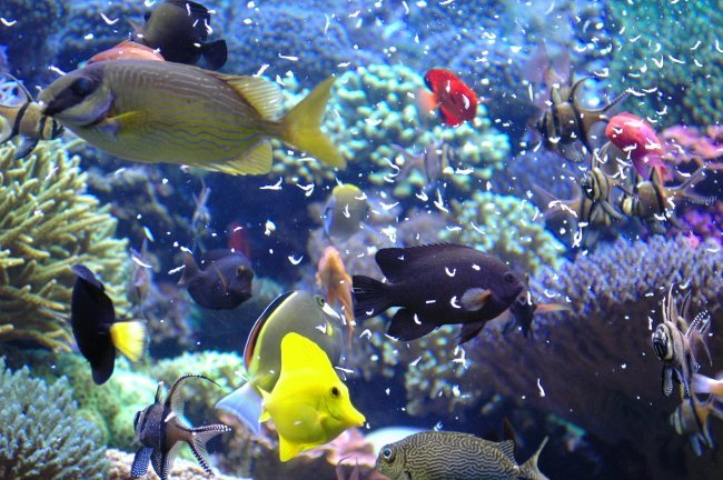 Canopy archives myaquarium for Your fish store