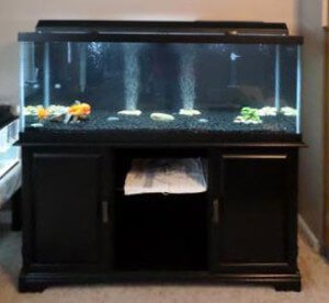 A Top Fin 75 Gallon Hooded Aquarium setup