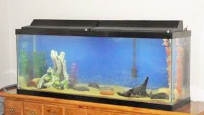 Top fin hooded 50 gallon aquarium review for Fish tank top cover