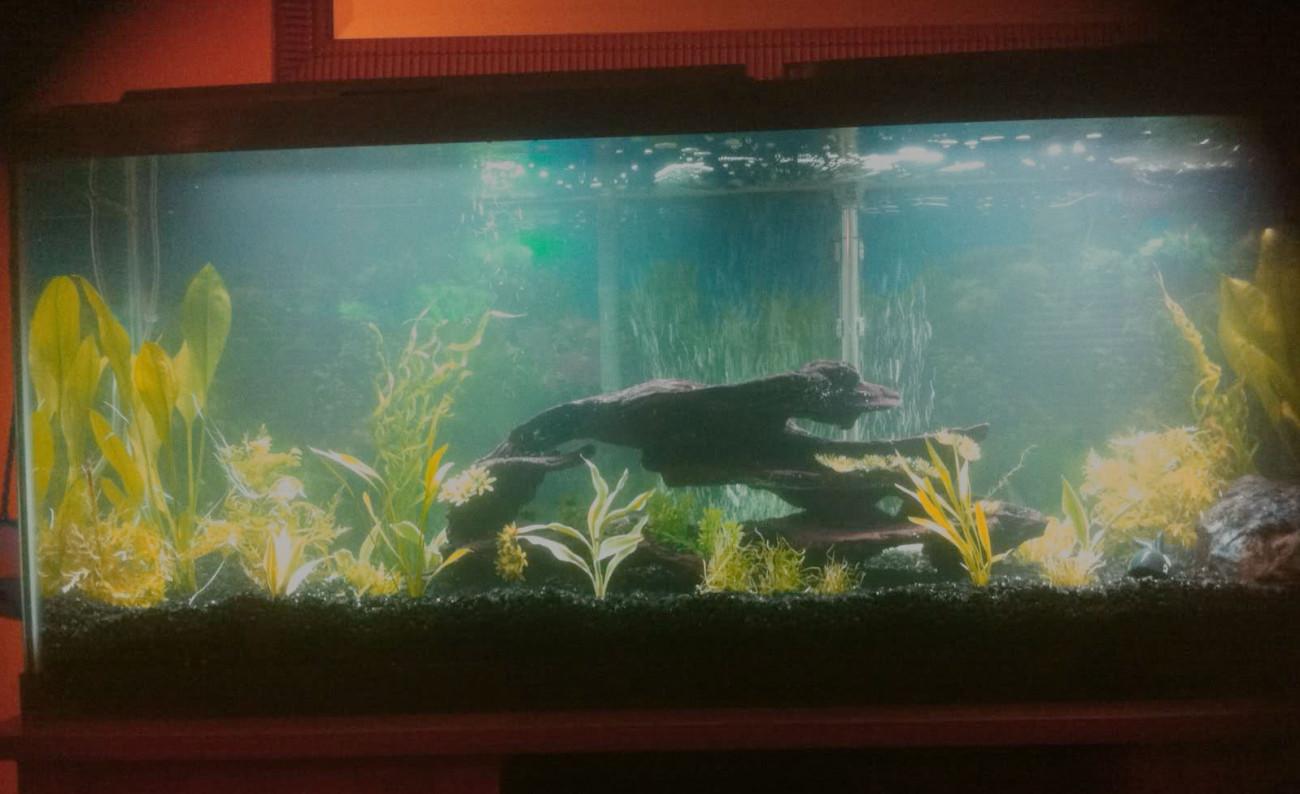 9 Beautiful 50 Gallon Aquariums Compared Myaquarium