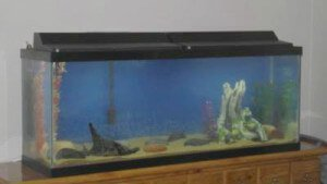 Top Fin 50 Gallon Aquarium
