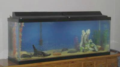 Top fin 50 gallon aquarium for 50 gallon fish tank dimensions
