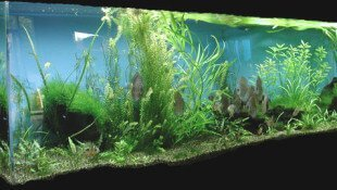 Substrate in a Plantmed Aquariu