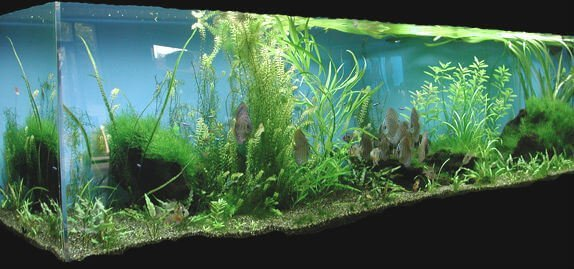 substrate your frequently asked planted aquarium questions