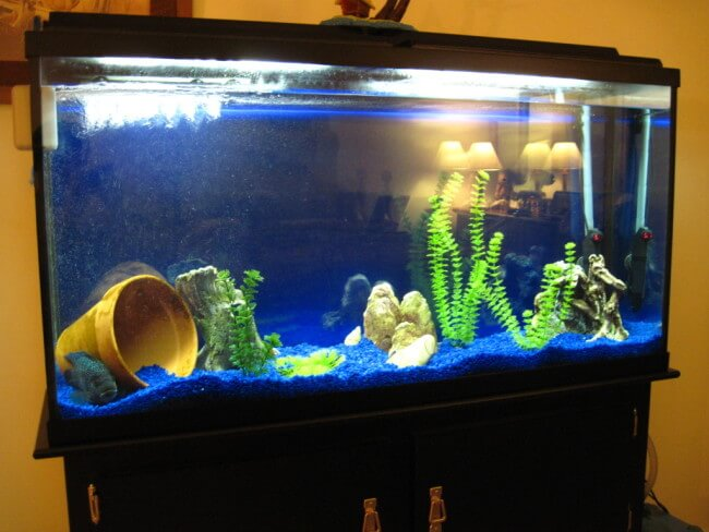 Marineland Heartland 60 Gallon Aquarium Ensemble Spec Review