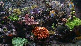 Reef & Coral Aquarium