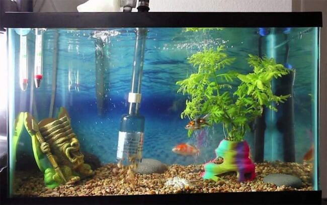 Myaquarium aquatic essentials for Fish tank pebbles