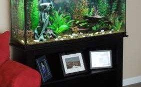 marineland 37 gallon led hood aquarium u0026 stand ensemble review u0026 spec