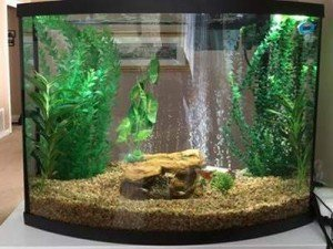 Marineland 38 Gallon Bow Front Fish Tank Kit